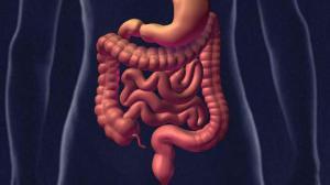 Врачи назвали пять способов поддержать здоровье кишечника